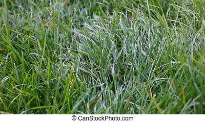 frais, herbe, -, naturel, fond