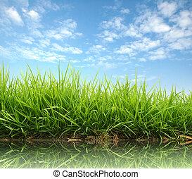 frais, herbe, printemps