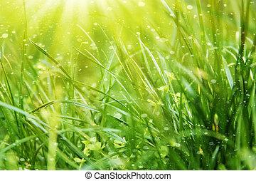 frais, herbe, vert