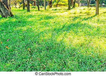 frais, herbe, vert, printemps