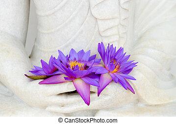 frais, image, fleurs, bouddha, mains