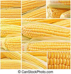 frais, maïs