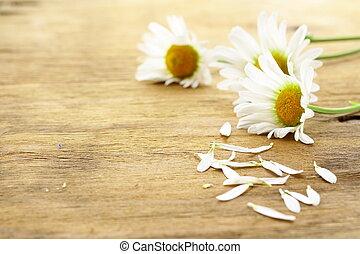 frais, pâquerette, camomille, fleurs