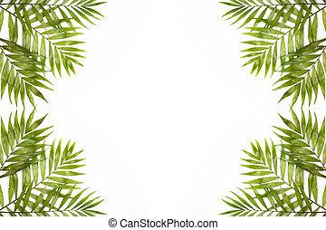 frais, plage, exotique, isolé, feuilles, paradis, frontière, concept, feuillage, vacances été, arbre, vacances, white., paume