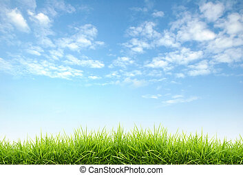 frais, printemps, herbe