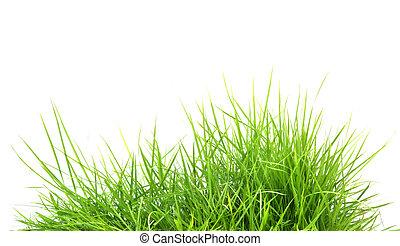 frais, printemps, herbe, vert