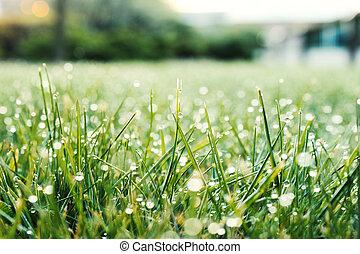 frais, rosée, herbe verte, matin