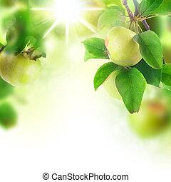 frais, verger, pommes, beau