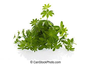 frais, woodruff, herbals