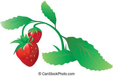 fraise, buisson