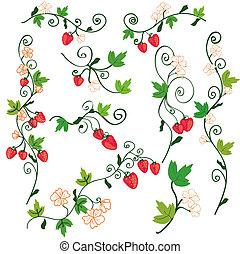 fraise, fond, éléments conception