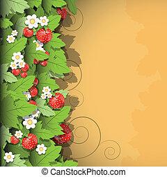 fraise, fond