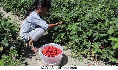 fraise, girl, seau, remplit