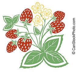 fraise, résumé, feuilles