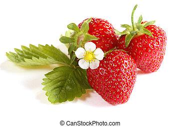 fraises, fond, blanc