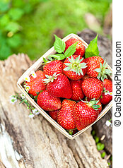 fraises, panier