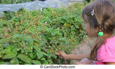 fraises, peu, sauvage, manger, girl