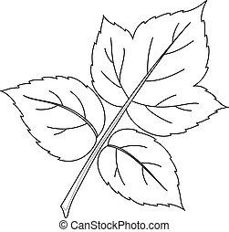 framboesa, folha, contornos