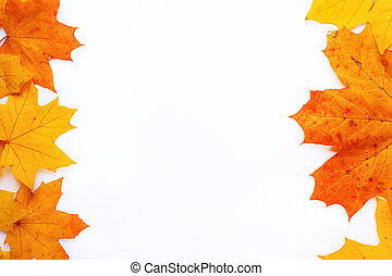 frame autumn orange leaves and copy space on white background