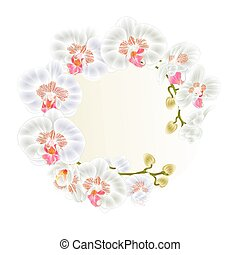 Frame Beautiful  Orchid white stem with flowers and  buds   vector.eps