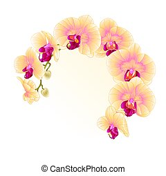 Frame Beautiful  Orchid Yellow stem with flowers and  buds closeup isolated vintage  vector.eps