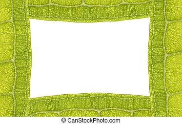frame, blad