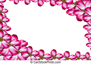 Frame by pink flower