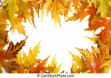 Frame composed of colorful autumn leaves over white background