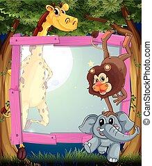 Frame design with wild animals at night
