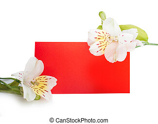 frame flowers with a red piece of paper background place for your text