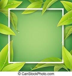 frame., folhas, água, verde branco, gotas