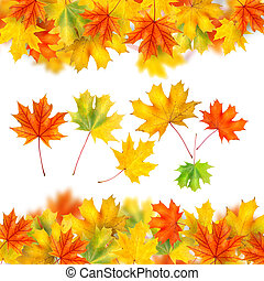 frame from autumn leaves isolated on white
