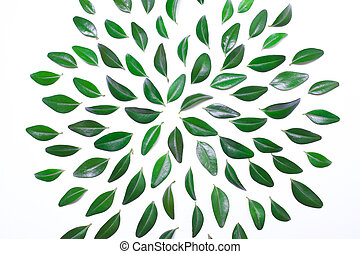 frame from green leaves on a white background