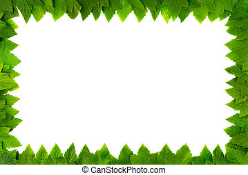 Frame from green leaves on white background with copy space for text. Border