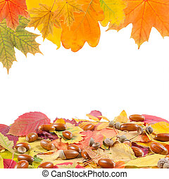 Frame from leaves and acorn