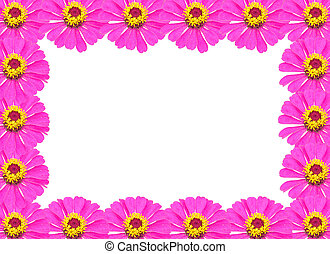 Frame from Pink Zinnia Flower Isolated on White Background