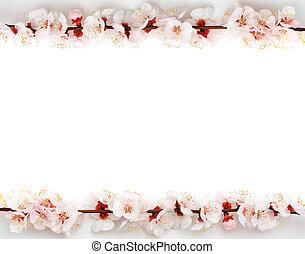 Frame from sakura - Isolated frame from sakura. Element of...