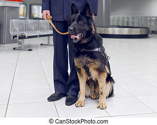 Frame image of a dog for detecting drugs at the airport standing near the customs guard.