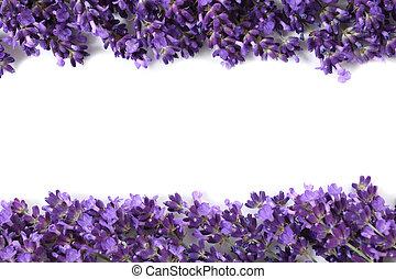 frame, lavendel