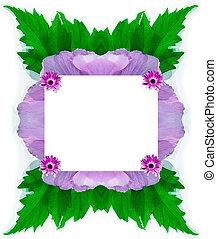 frame, leaves, Malva, sylvestris