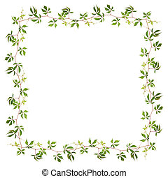 Frame made of parthenocissus twig with green leaves isolated...