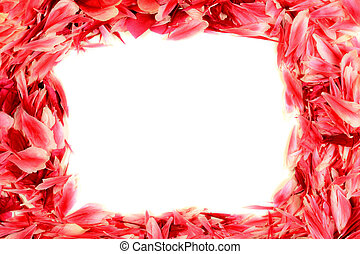 frame made of red rose petals
