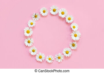 Frame made of white daisies on a light pink background