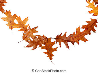 Frame of autumn dried oak leaves with copy space. Isolated on white background.