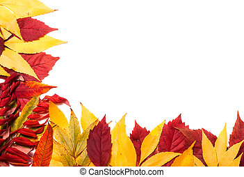 Frame of autumn leaves isolated on white background