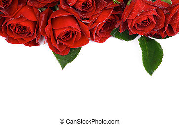 Frame of Beautiful Red Roses with Leaves and Water Droplets isolated on white background