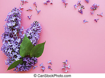 Frame of branches and flowers of lilac on a pink background...