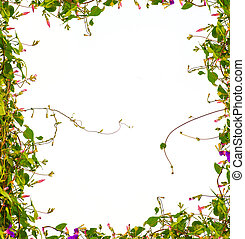 frame of branches on a white background