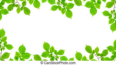 Frame of branches with green leaves on a white