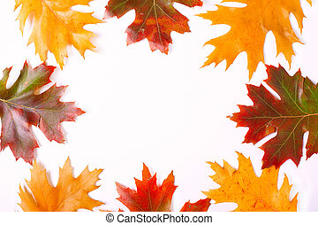 frame of colorful autumn leaves on a white background